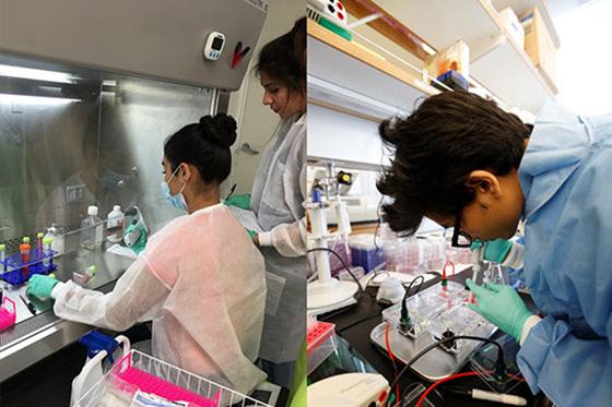 stem_cell_program_16560x373-2